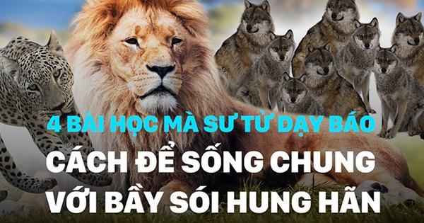 Sư tử dạy Báo cách để sống chung với bầy Sói hung hãn, ai trong chúng ta cũng nên suy ngẫm
