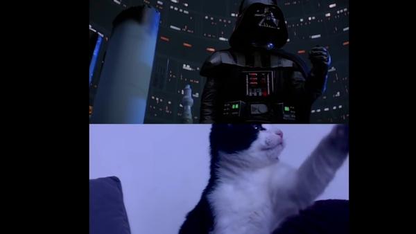 Không thể nhịn cười với chùm video mèo vào vai diễn viên chính trong phim bom tấn