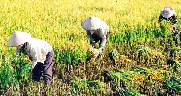 Ý chí khởi nghiệp của người trẻ ngày nay thật chẳng bằng một bác nông dân