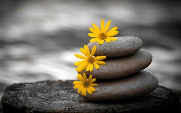 Chúng ta tìm kiếm hạnh phúc nhưng thường xuyên đày đọa bản thân vào trạng thái bất an. Muốn an yên cả đời, nhất định phải nhớ hai chữ này