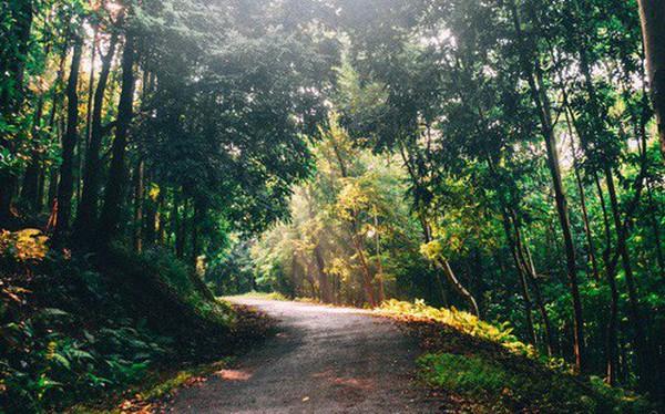 Đây là Đại học duy nhất ở Việt Nam có 1 khu rừng tuyệt đẹp ngay trong khuôn viên trường, tha hồ sống ảo
