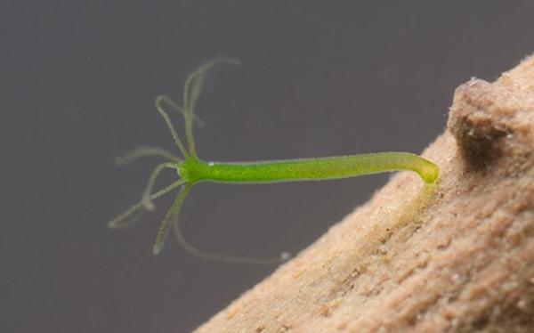 Thiên nhiên kì diệu: Đây là những sinh vật khiến bạn tin vào sự bất tử