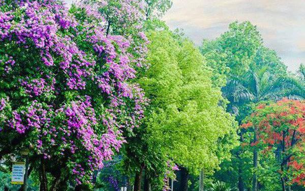 Ngay tại Hà Nội có một ngôi trường rộng gần 200ha, cây cối, hoa trái phủ xanh khắp nơi như rừng nhiệt đới