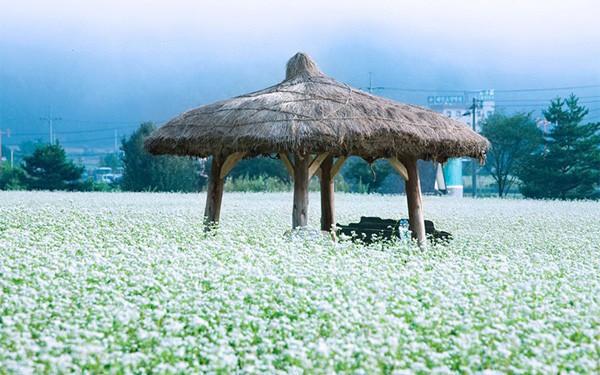 Công việc giống như một mảnh đất, nếu không hợp cho việc trồng lúa mạch, có thể trồng thử đậu, dưa leo, kiều mạch... Bạn chắc chắn sẽ có thu hoạch, chỉ cần đừng bỏ cuộc