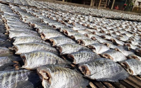 Ghé thăm làng cá khô lâu đời ở Miền Tây Nam Bộ
