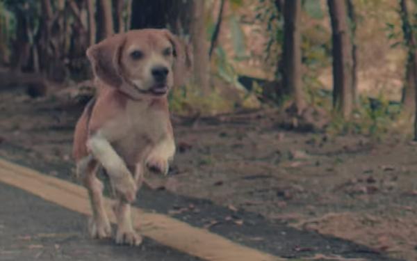 Năm Tuất sắp đến rồi, AirAsia tại Trung Quốc kể câu chuyện sum họp dưới góc nhìn của một chú chó