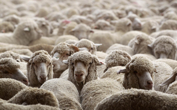 Đây là cách nhanh nhất giúp bạn thất bại: Hãy đi theo đám đông