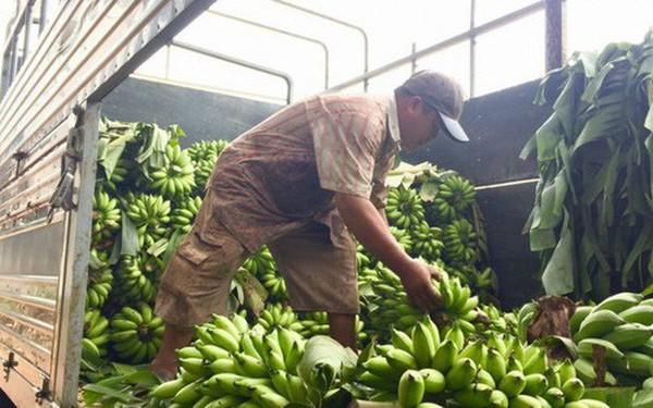 Thương lái Trung Quốc 'giở trò', nông dân Đồng Nai 'trượt vỏ chuối'