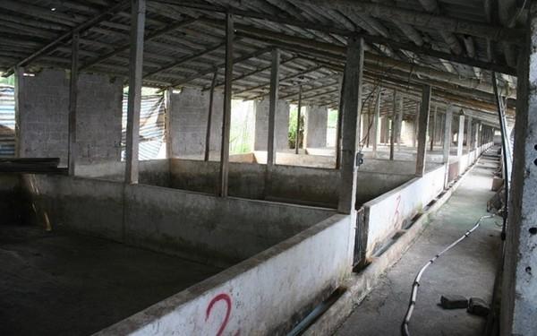 Hà Nam: Xót xa cảnh trại lợn bỏ trống, người nông dân phá chuồng làm thuê trả nợ