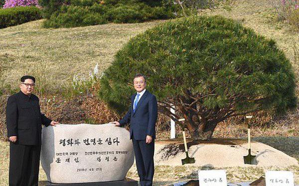 Cầu kỳ như cách nhà lãnh đạo Kim Jong Un và Tổng thống Hàn Quốc Moon Jae-in trồng cây hòa bình