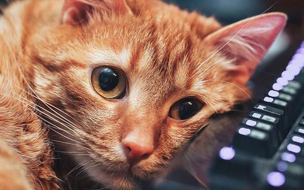 Đồng sáng lập Reddit đưa ra lý do tại sao cư dân mạng Internet lại yêu mèo đến thế, câu trả lời đơn giản đến bất ngờ