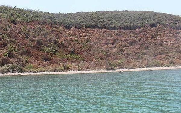 Nhiều hòn đảo ở huyện Vạn Ninh (Khánh Hòa) bị phát dọn, chiếm đất để mua bán.