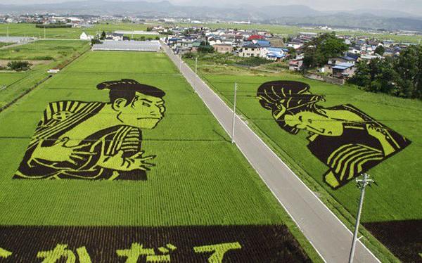 Kết quả hình ảnh cho Nghệ thuật lúa gạo là nghệ thuật tạo ra hình ảnh bằng cách trồng lúa các loại khác nhau theo một thứ tự nhất định. Nó gần đây đã trở nên rất phổ biến ở Nhật Bản.