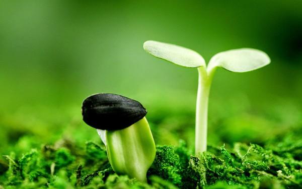 Bạn thuộc Tâm thái cố định hay Tâm thái trưởng thành? Câu trả lời sẽ cho biết mức độ thành đạt của bạn