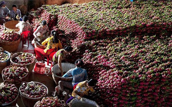 Cơ hội làm giàu từ kinh doanh trái cây