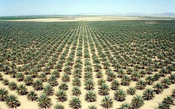 Các nhà khoa học đã trồng được cây tại sa mạc nóng tới 50 độ C
