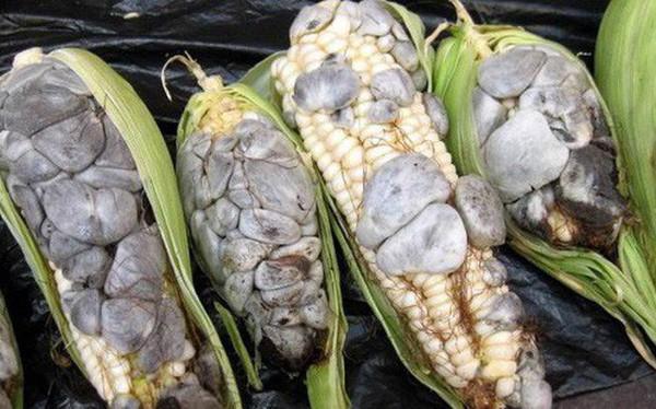 Ẩm thực lạ bốn phương: Đặc sản ngô mốc đen xì của người Mexico