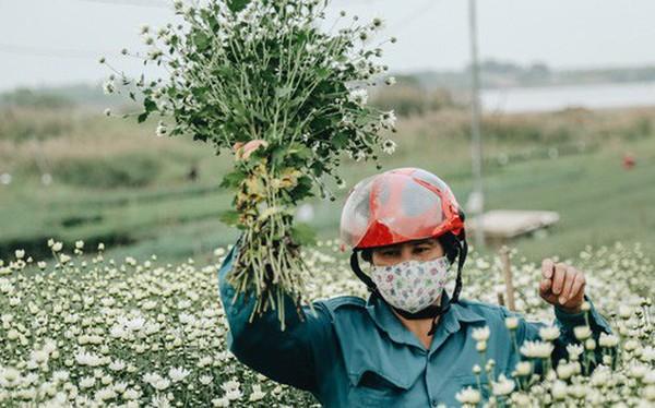 Cúc hoạ mi vào vụ mùa, nông dân Hà Nội hớn hở chào mừng khách đến mua hoa và chụp ảnh