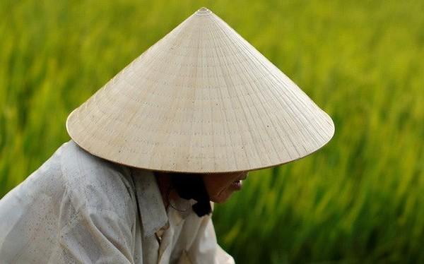 Nikkei chỉ ra lý do khiến nông nghiệp Đông Nam Á trì trệ