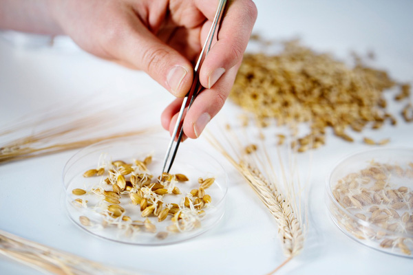 Carlsberg Smooth Draught – Tinh hoa từ sự sáng tạo không ngừng nghỉ, niềm tin vững chắc và nguồn cảm hứng vô tận