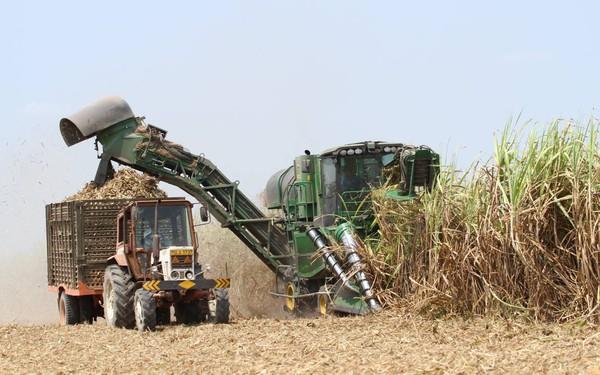 Doanh thu thuần Quý I niên độ 2019 – 2020 của TTC Sugar đạt 3.181 tỷ đồng, tăng 26% so với cùng kỳ niên độ trước