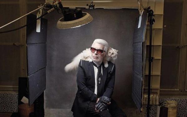 Cuộc sống vương giả của mèo Choupette - tình yêu lớn nhất đời Karl Lagerfeld