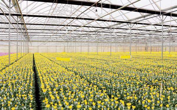 Quy mô và chất lượng là yếu tố tiên quyết để hoa tươi Việt Nam vươn ra thế giới
