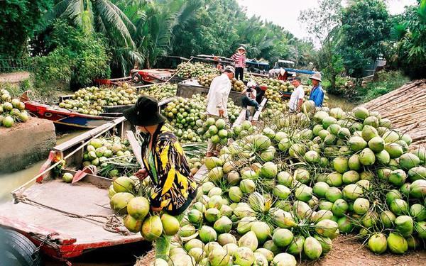 """Lần đầu tiên các DN trong hệ sinh thái TMĐT Việt nam quyết bắt tay đưa dừa Bến Tre """"lên sàn"""", doanh số dự kiến tăng hơn 20 lần"""