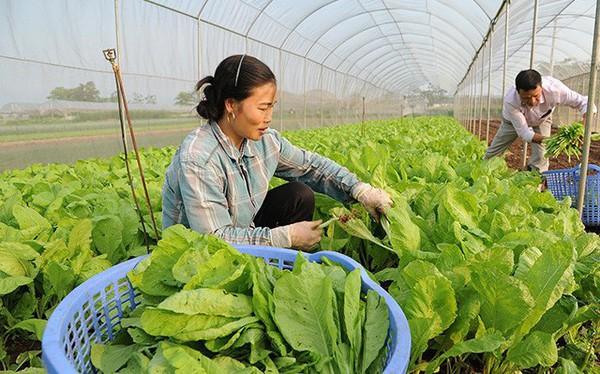 """Grab đã """"đốt"""" hơn 100 triệu USD ở thị trường Việt Nam, và giờ họ muốn đầu tư vào các startup nông nghiệp"""