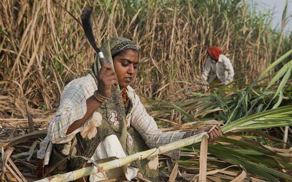 Câu chuyện đau xót về 'làng phụ nữ không tử cung' bên những cánh đồng mía ở Ấn Độ