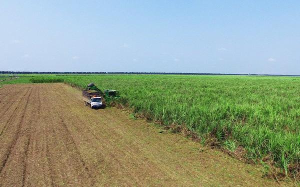 Thách thức tìm lời giải cánh đồng mẫu lớn cho nền nông nghiệp Việt Nam nhìn từ chuyện trồng mía của Thành Thành Công và trồng lúa ở Lộc Trời