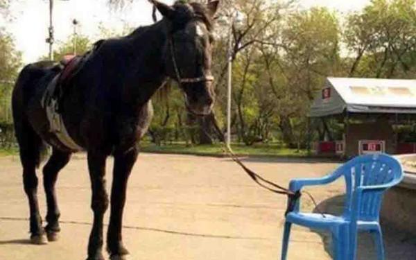 Hình ảnh con ngựa bị buộc vào chiếc ghế và tố chất không thể thiếu của một nhà lãnh đạo thành công