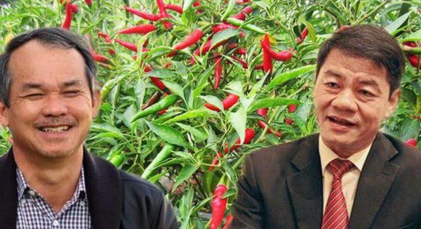 """Thaco và các cá nhân liên quan liên tục gia tăng tỷ lệ sở hữu, liệu """"bầu Đức' có mất quyền kiểm soát tại công ty CP nông nghiệp quốc tế Hoàng Anh Gia Lai?"""