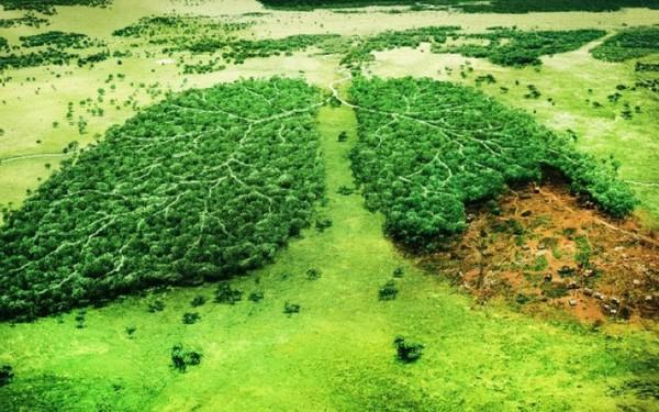 Muốn cứu rừng Amazon và thế giới tránh khỏi cuộc diệt chủng