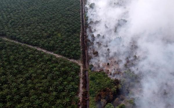 Cơn khát dầu cọ: Cội nguồn của việc cháy rừng hàng loạt tại Indonesia, khiến toàn Đông Nam Á ngập chìm trong ô nhiễm không khí