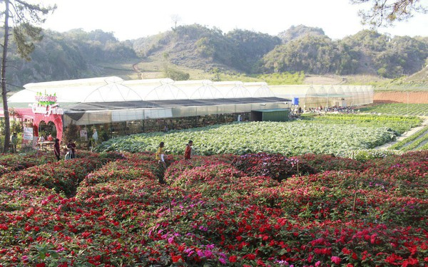 Lên núi trồng dâu tây, thu tiền tỉ mỗi năm