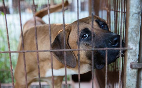 Là ngành công nghiệp hàng tỷ USD ở Hàn Quốc, nghề bán thịt chó không thể lụi tàn ngay
