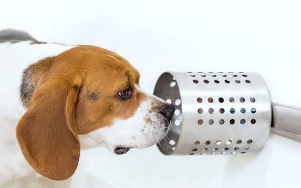 Chó có thể đánh hơi được tế bào ung thư, độ chính xác đến 97%