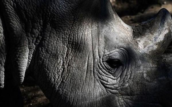 Liên Hợp Quốc cảnh báo: 1 triệu loài sinh vật có nguy cơ tuyệt chủng do bàn tay con người