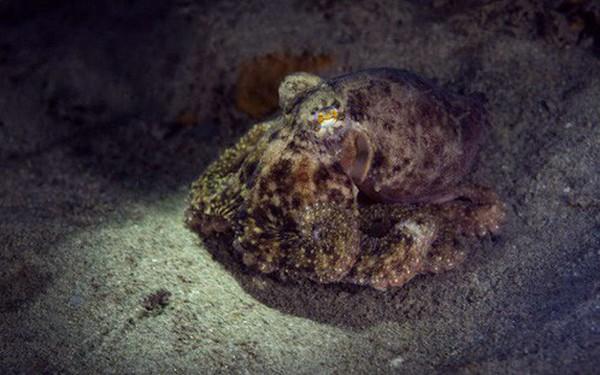 Bi kịch từ con người: Biến đổi khí hậu đang khiến sinh vật biển rơi vào cảnh mù lòa