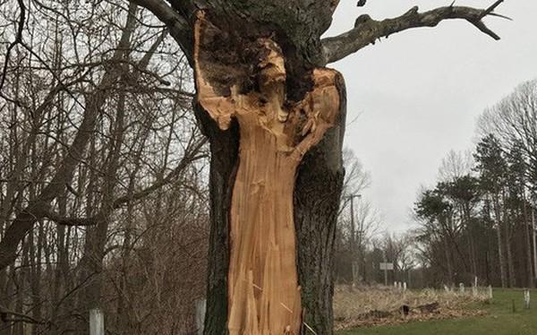 Hình dáng người phụ nữ trên thân cây và câu chuyện về người vợ bị bội phản, người mẹ dành cả đời đi tìm con gái ám ảnh công viên nước Mỹ