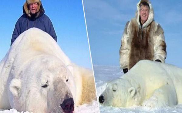 """Vạch trần các tour săn bắn 5.000 con gấu Bắc Cực: """"Huy chương"""" đẫm máu của giới thợ săn giàu có khiến cả thế giới căm phẫn"""