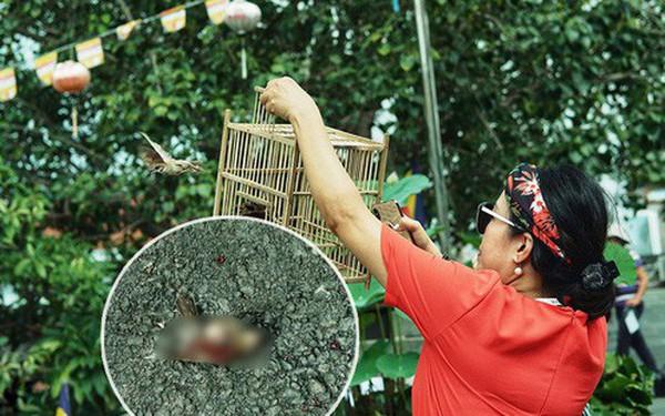 Nỗi buồn chuyện phóng sinh ngày rằm tháng 7: Những chú chim kiệt sức ngay khi được thả về trời