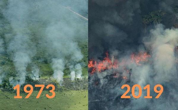 Loạt ảnh Amazon trước và sau đại nạn cháy rừng 2019: Lá phổi