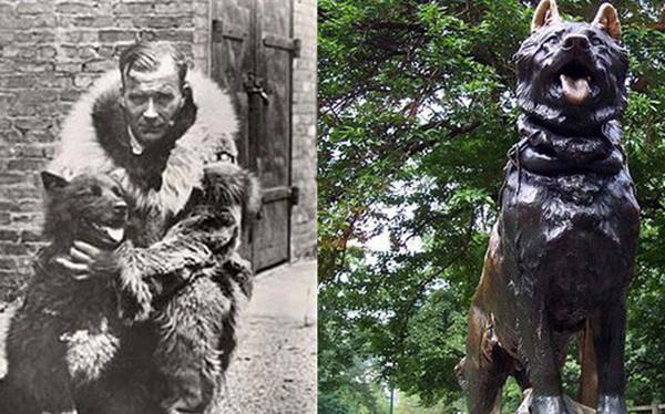 Câu chuyện có thật về 150 chú chó husky anh hùng từng cứu sống ngôi làng 10.000 người khỏi căn bệnh bạch hầu tử thần