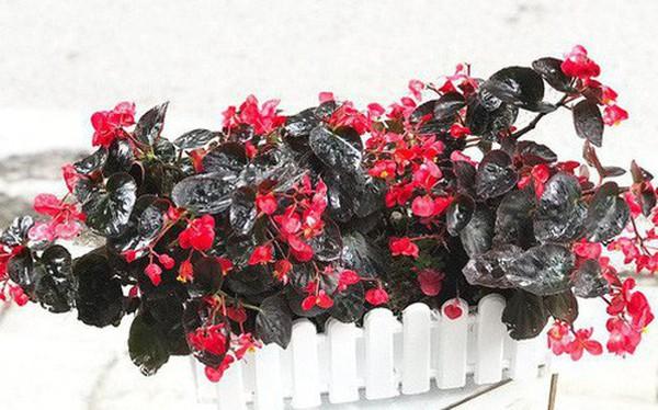 Người sinh vào mùa xuân-hạ-thu-đông nếu chọn đúng các loại cây may mắn bày nơi làm việc và tại nhà sẽ giúp công việc hanh thông, tiền tài đầy túi