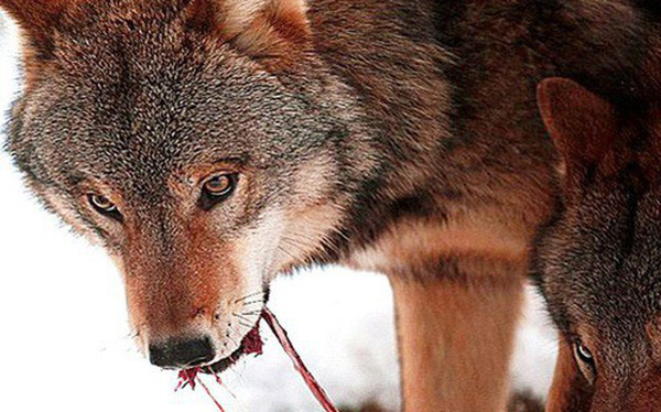 """Ấp rắn trăm ngày không thấy ấm, nuôi sói cả đời cũng không thân, có những chuyện dù bị """"kề dao vào cổ"""" cũng không nên làm"""