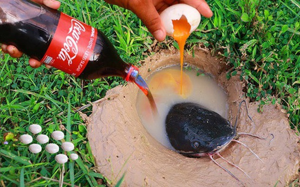 Dùng hỗn hợp huyền thoại Coke + Mentos để bắt cá trê khổng lồ, người đàn ông gây bão dân mạng và đây là sự thật khoa học đằng sau đó