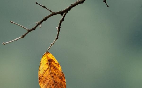 Bài thơ 4 câu tóm gọn 8 thiếu sót của đời người, nằm lòng sẽ dễ bề trở nên xuất chúng