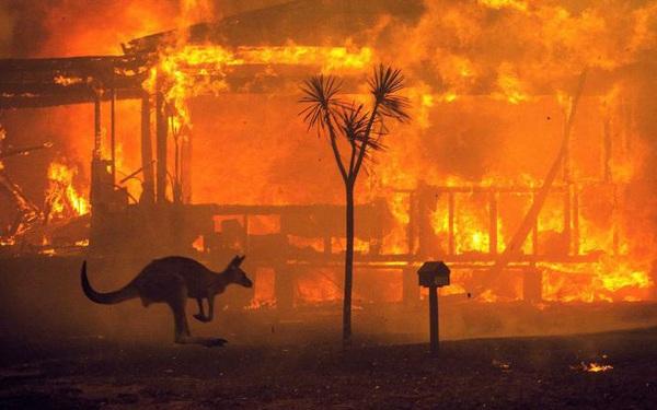 """Gần NỬA TỈ sinh vật bị thiêu rụi, 1/3 số gấu koala chết cháy: Úc đang trải qua trận cháy rừng """"đại thảm họa"""" thực sự mà chưa nhìn thấy lối thoát"""